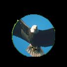 Minnieville Elementary School logo