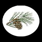 Timber Ridge School logo